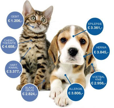 chronische ziekte huisdieren