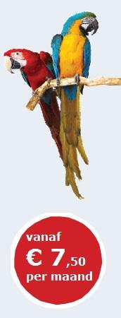 verzekering voor papegaaien